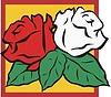 roten und weißen Rosen