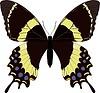 Papilio garamas Schmetterling