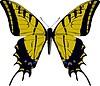 Papilio multicaudatus Schmetterling