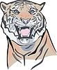 Kopf des Tigers