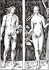 Adam and Eva; von Dürer