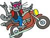Katze Biker