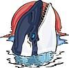 Schwertwal (Orca)