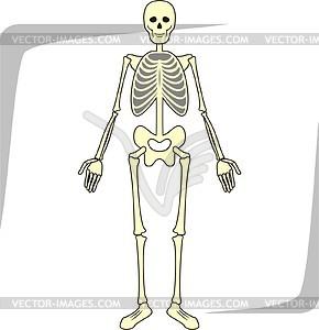 Skelett - Vector-Abbildung