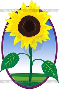 Sunflower - vector clipart