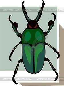 Käfer - Clipart