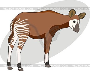 Okapi vector clipart for Okapi coloring page