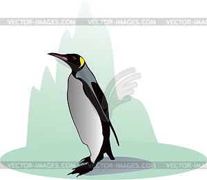 Penguin - vector clipart