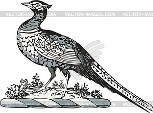 Pfau - Vektor-Illustration