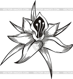 Blume Tattoo - Vektor-Design