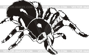 Spider tattoo - vector image