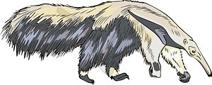 Ameisenbär - Clipart