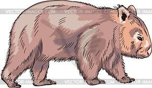 Wombat - vektorisiertes Clip-Art