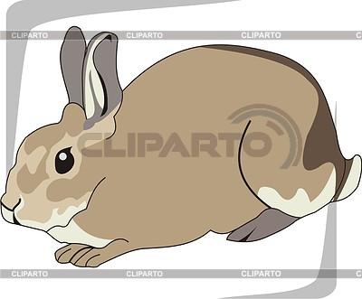 Hare | Klipart wektorowy |ID 2003825