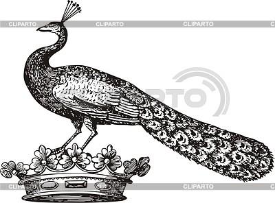 Peacock crest | Klipart wektorowy |ID 2012057