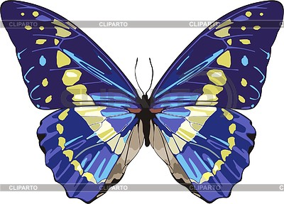 Schmetterling | Stock Vektorgrafik |ID 2018805