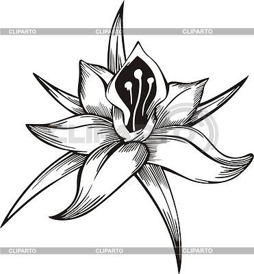 Blume Tattoo | Stock Vektorgrafik |ID 2005742