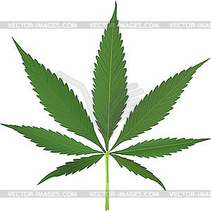 Cannabis - farbige Vektorgrafik