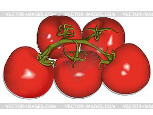 Tomaten - Clipart-Design