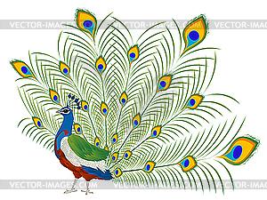 Peacock - Vektor-Clipart