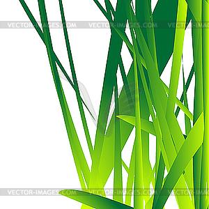 Frisches Gras - Vector-Bild