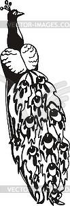 Peacock - schwarzweiße Vektorgrafik