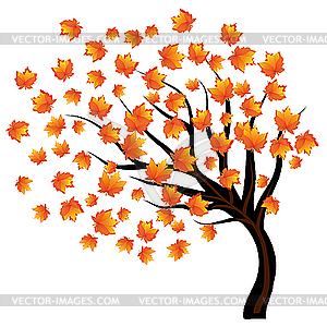 Herbst-Ahorn im Wind - Vektor-Skizze