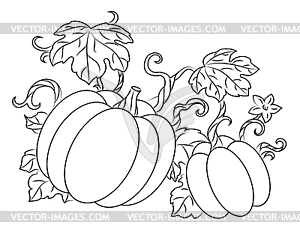 Pumpkins harvest - vector image