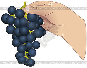 Hand mit Weintrauben - Vektor Clip Art