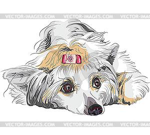 Hund Rasse Chinese Crested - Vector-Bild
