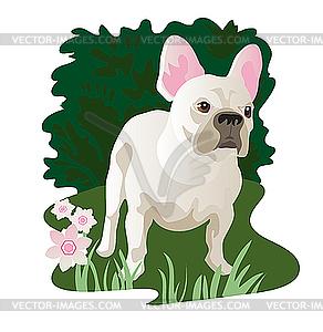 Weiße Französische Bulldogge im Garten - Vektor-Design