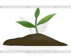 Junge pflanze in dunklen boden clipart for Boden clipart