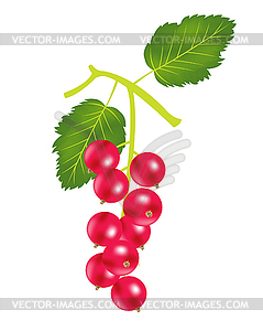 Berry Sauerklee - Vektor-Bild