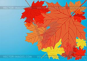 Herbstliche Ahornblätter - Vektorgrafik