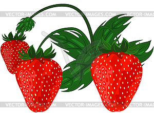 Reife rote Erdbeeren - Stock-Clipart