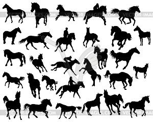 Silhouetten von Pferden - Vektor-Bild