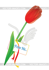 Rote Tulpe - Vector-Illustration
