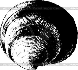 Muschel - Vektorgrafik