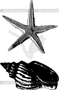 Muschel und Seestern - Vektor-Clipart