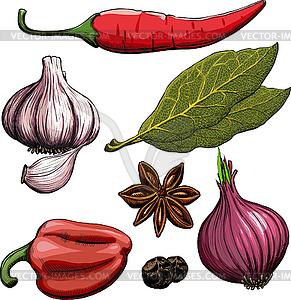 Spice. Zwiebel, Knoblauch, Pfeffer, Lorbeer, Piment - vektorisiertes Design