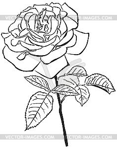 Große Rose - Vektor-Design
