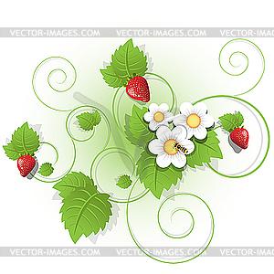 Beeren und Blätter der Erdbeere - Stock Vektor-Bild