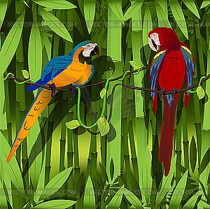 Papagei - vektorisiertes Bild