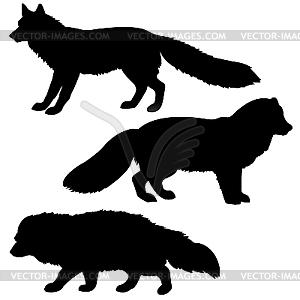 Silhouette von Polarfuchs, Dachs und Rotfuchs - Vektor-Bild