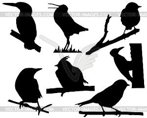 Silhouetten von kleinen Vögeln auf dem Zweig - schwarzweiße Vektorgrafik