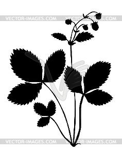 Silhouette der Pflanze der Erdbeere - Vektor-Clipart / Vektorgrafik