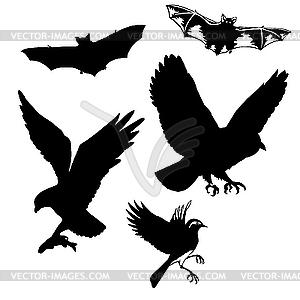 Vögel und Fledermäuse - Vektor-Clipart EPS