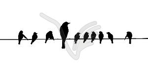 Silhouetten der Vögel auf Draht - Vector-Clipart / Vektor-Bild