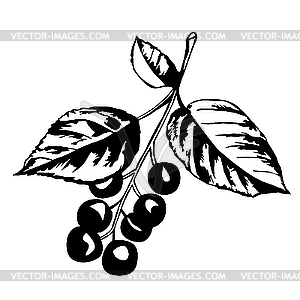 Zweig des Kirschbaums mit Beeren - Stock Vektor-Clipart