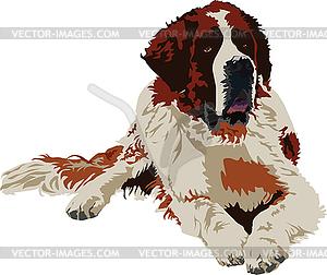 Bernhardiner-Hund, Rasse - vektorisierte Grafik